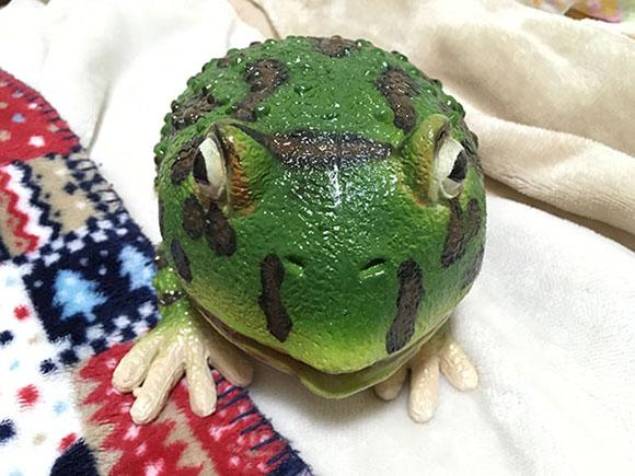 Horned Frog_9654b.jpg