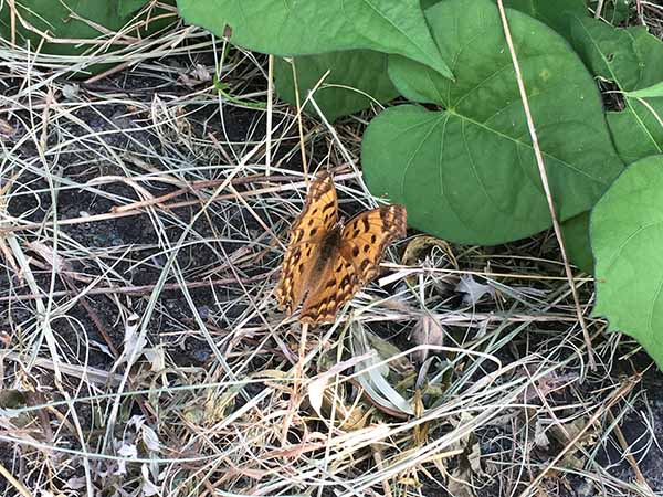 butterfly_5934a.jpg