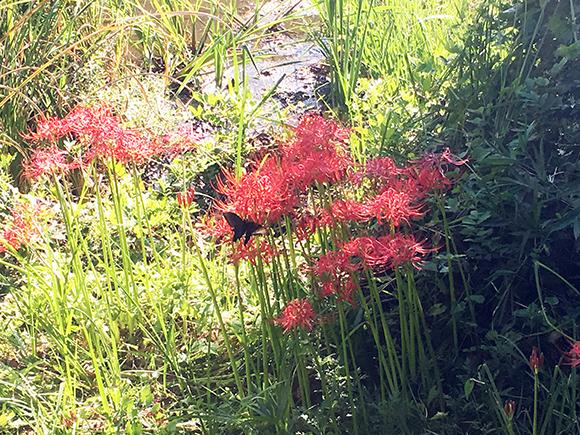 butterfly_7651b.jpg