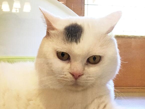 cat_5885a.jpg