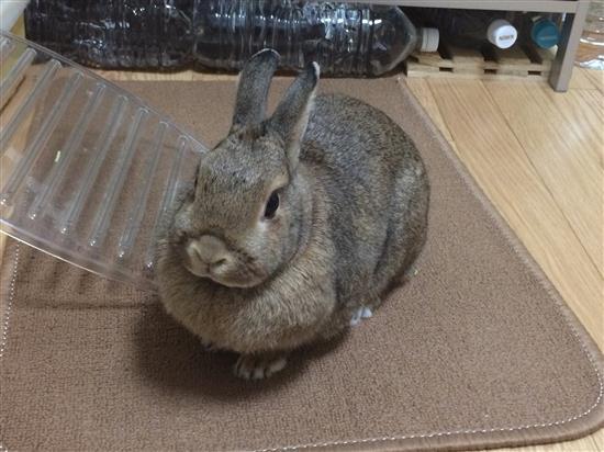chimaki_041a.jpg
