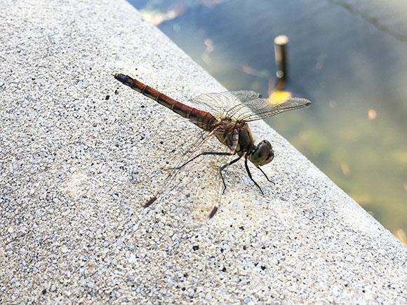 dragonfly_7635b.jpg