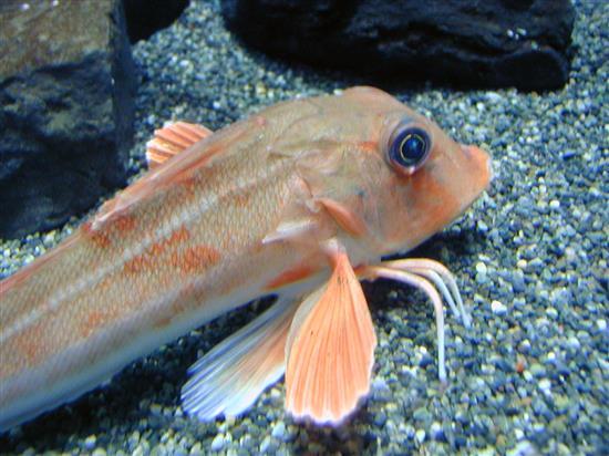 fish_P1010023a.jpg