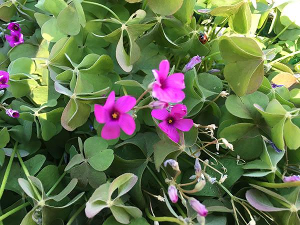 flower&ladybug_5750a.jpg