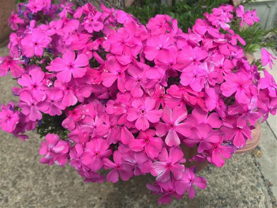 flower_003a.jpg