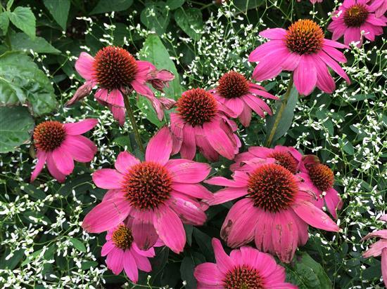 flower_021b.jpg