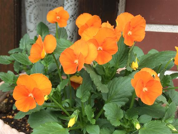 flower_022a.jpg