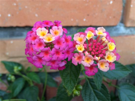 flower_029a.jpg