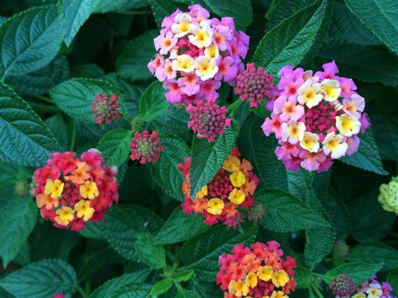 flower_032a.jpg