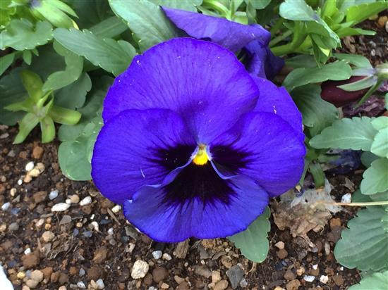 flower_036a.jpg