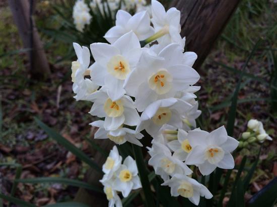 flower_039a.jpg