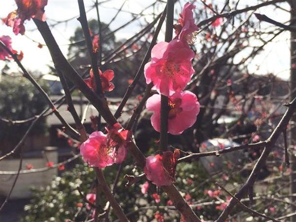 flower_054a.jpg