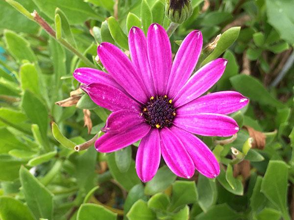 flower_0764a.jpg