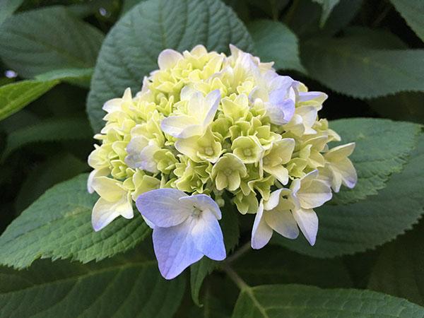 flower_0841a.jpg