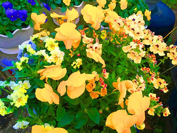 flower_0845f.jpg
