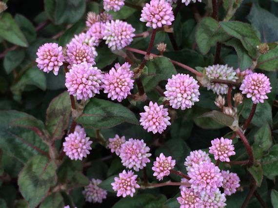flower_088a.jpg