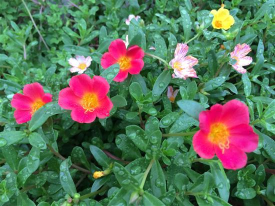 flower_090a.jpg