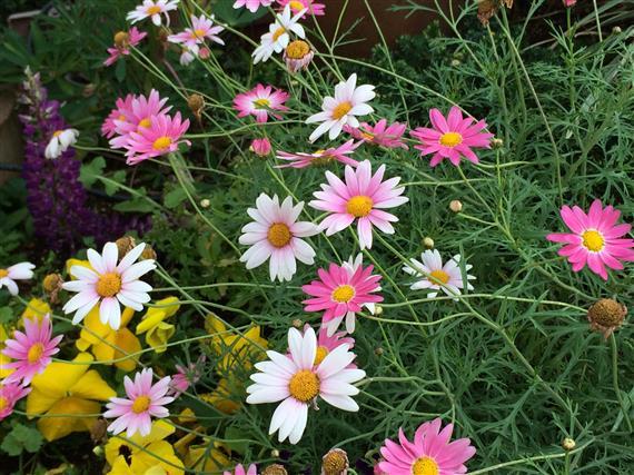 flower_114a.jpg