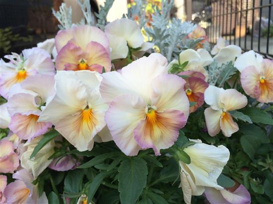 flower_136a.jpg