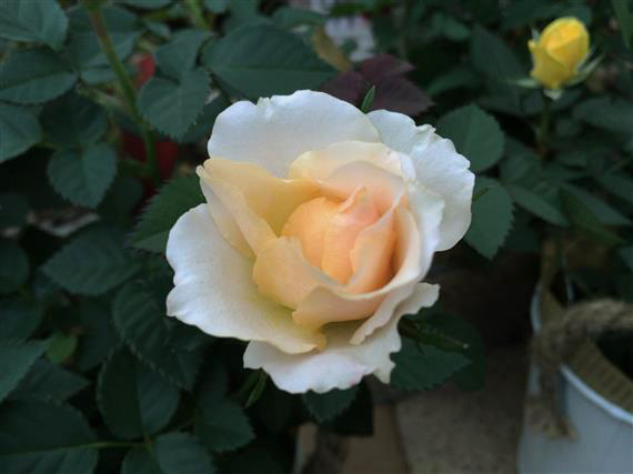 flower_139a.jpg