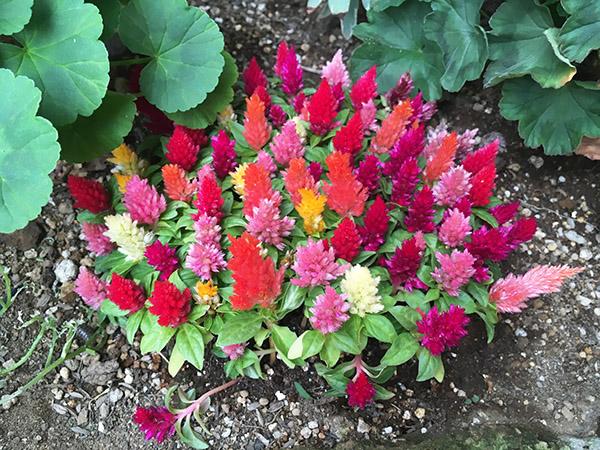 flower_1548a.jpg