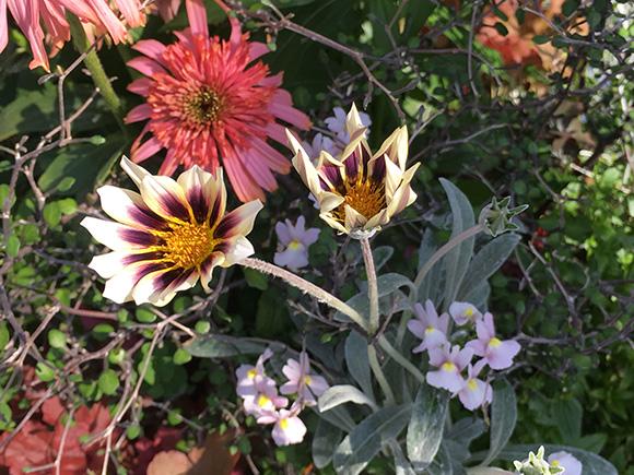 flower_2055b.jpg