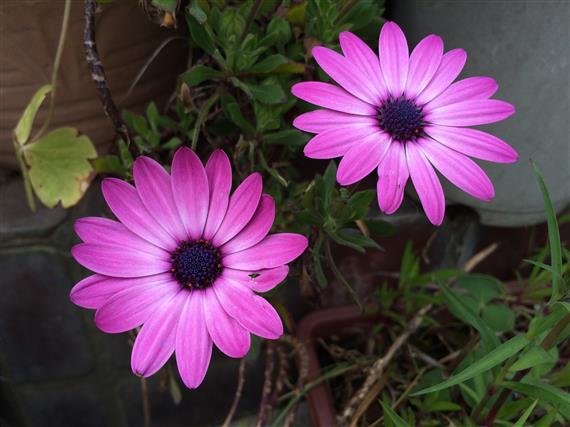 flower_209a.jpg