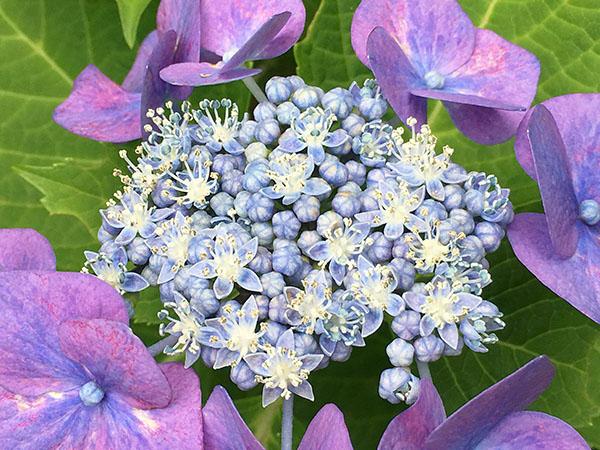 flower_2460b.jpg