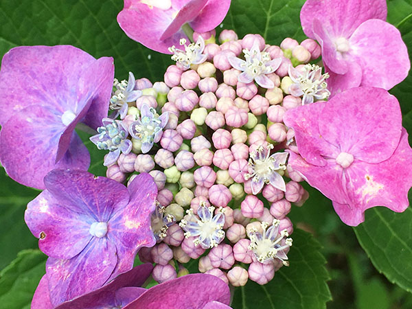 flower_2462a.jpg