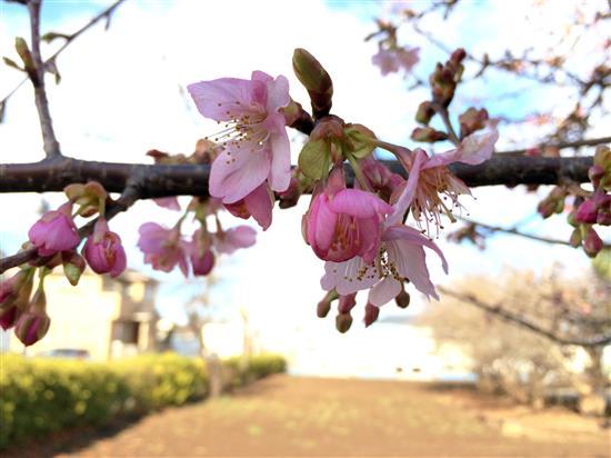 flower_265a.jpg