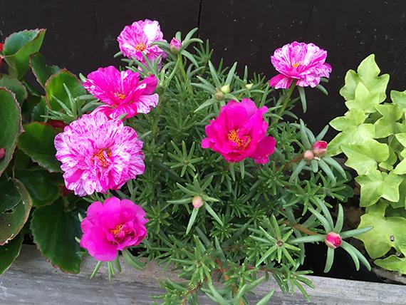 flower_2798b.jpg
