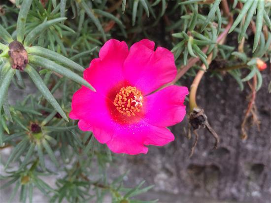 flower_3211a.jpg