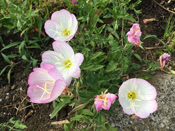 flower_3314b.jpg