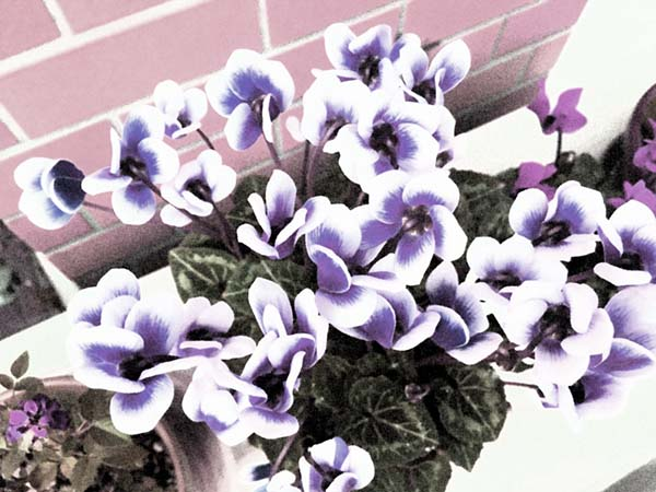 flower_3657c.jpg