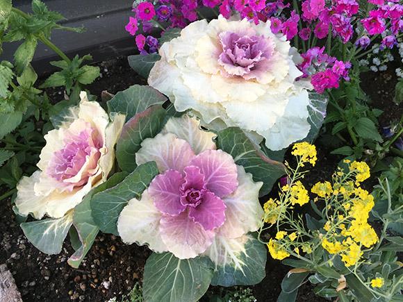 flower_3808b.jpg