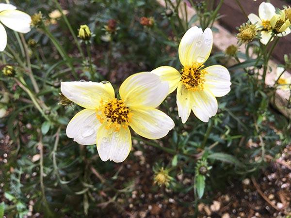 flower_4641b.jpg