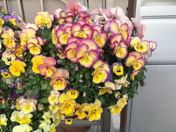 flower_6377c.jpg