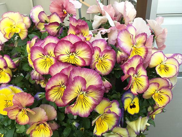 flower_6380b.jpg