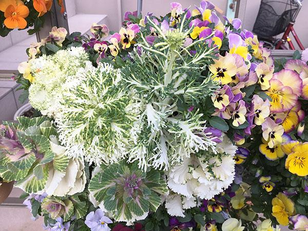 flower_6382b.jpg