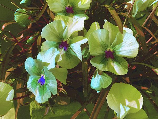 flower_6995c.jpg