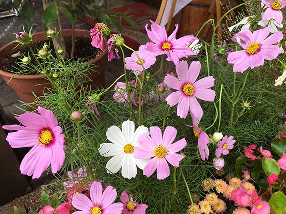 flower_7815b.jpg