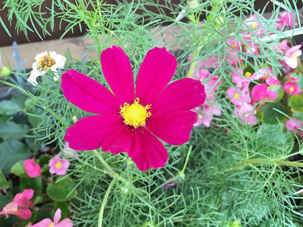 flower_7826a.jpg