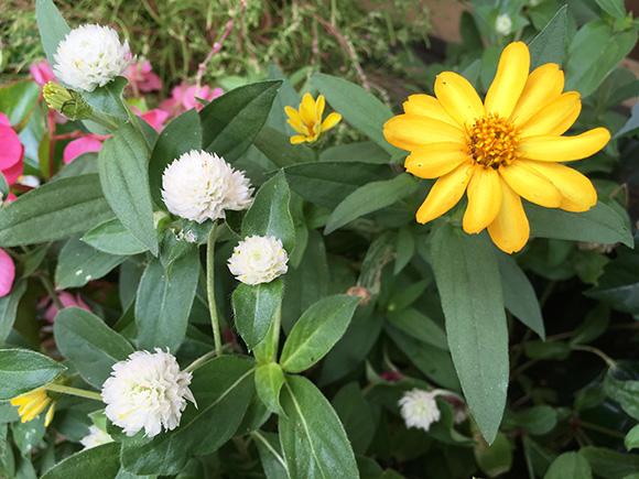flower_7831a.jpg