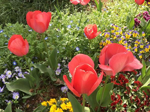 flower_7864b.jpg