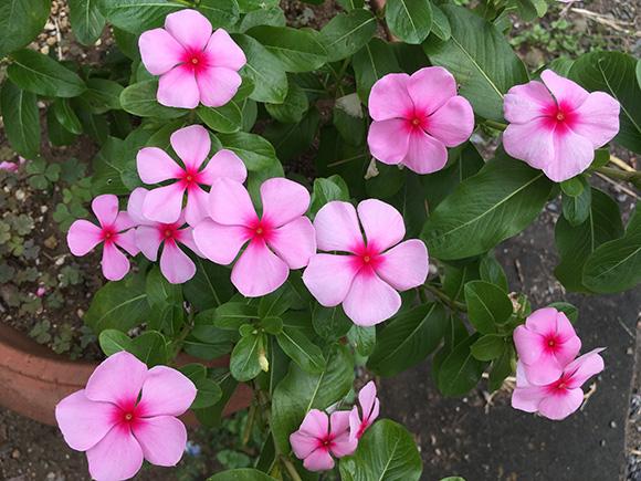 flower_7909b.jpg