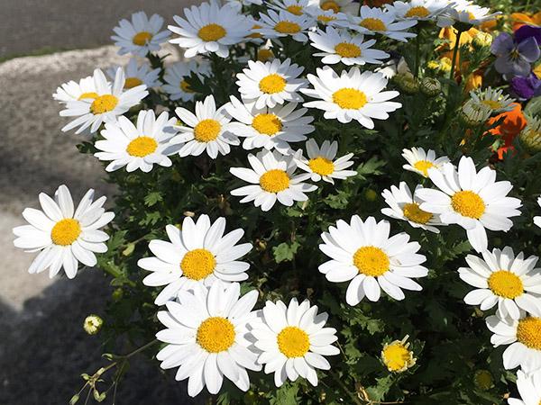 flower_8283a.jpg