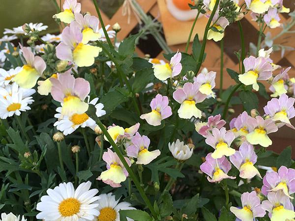 flower_8305a.jpg