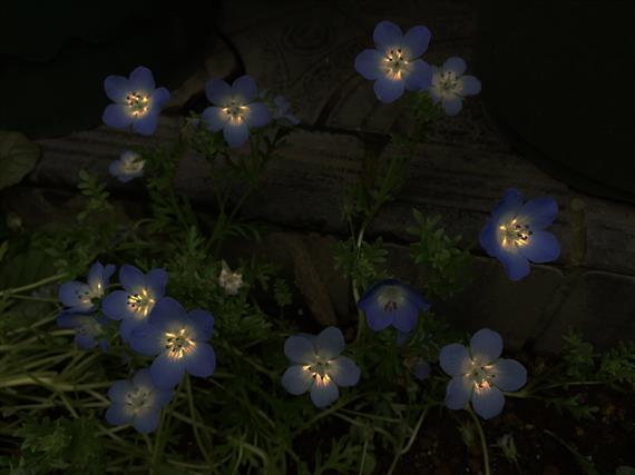 flower_8520a.jpg