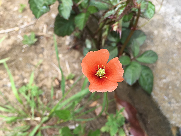 flower_8539a.jpg