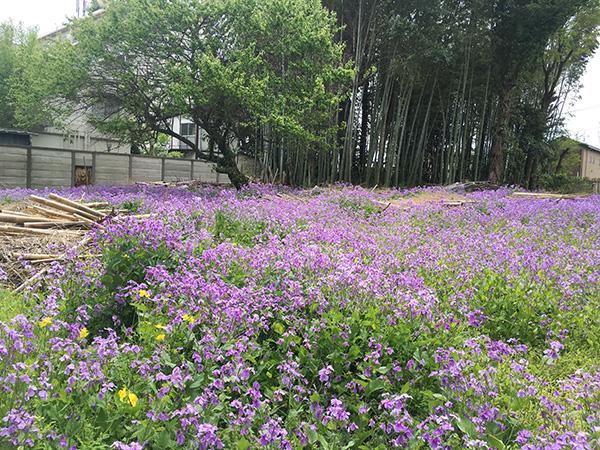 flower_8552a.jpg